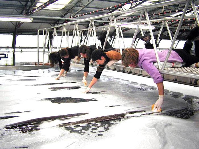Voici comment bien nettoyer son tapis !